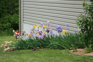 birds, flowers 038
