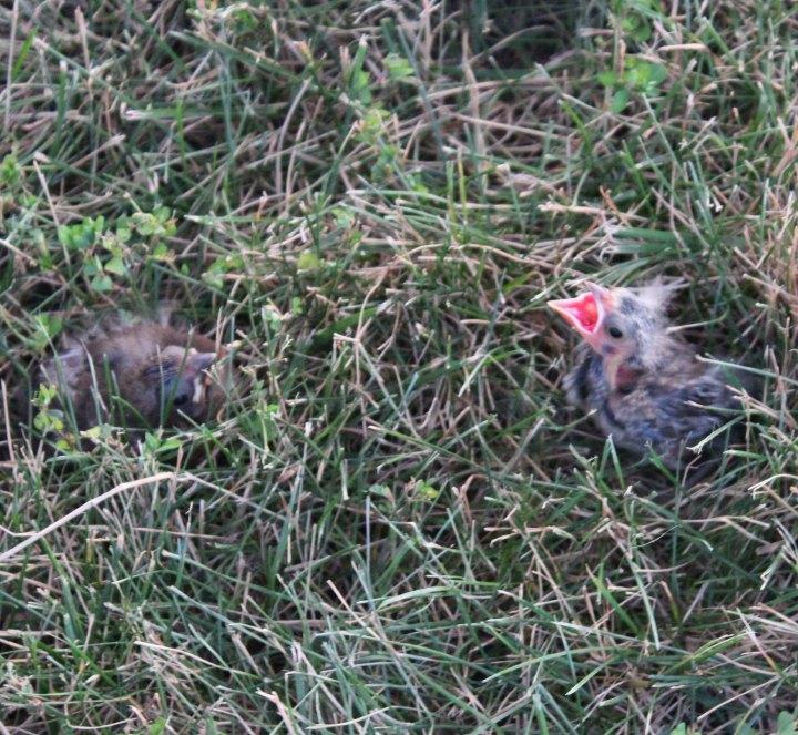 Bird Rescue Babies
