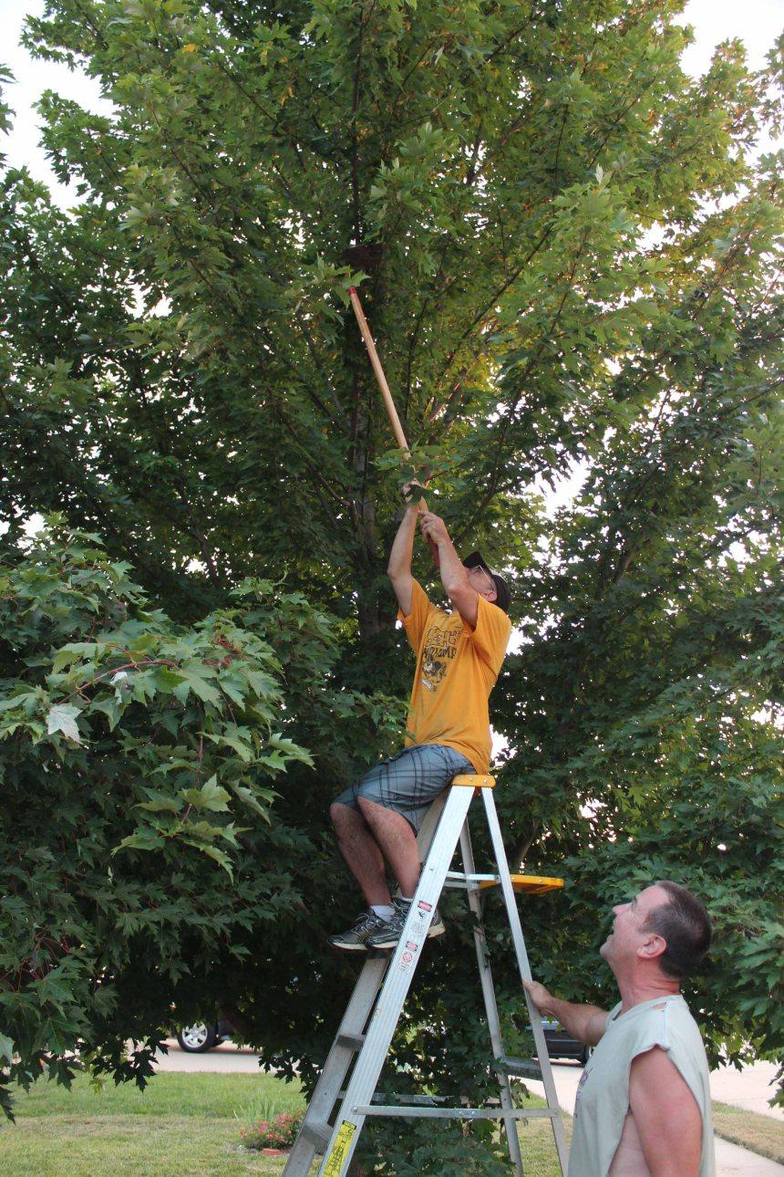 Bird Rescue Tree