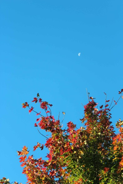 Moon 002 small